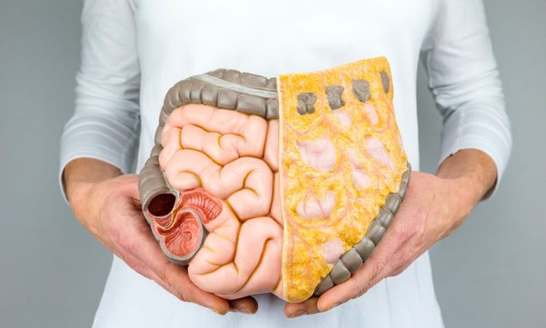 A type of gut bacteria may increase risk of bowel cancer