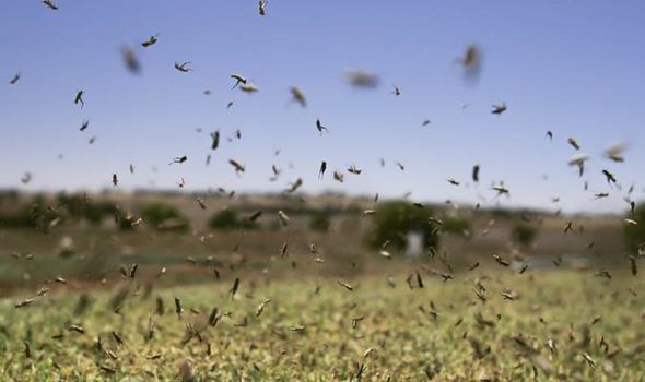insect populations