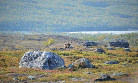 driving Arctic greening